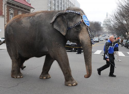 Man, 84, trampled to death by escaped circus elephant in France