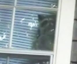Raccoons invade Houston apartment, taunt resident through window
