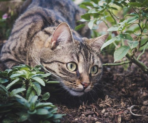 To keep backyard animals safe from cats, offer more meat and play