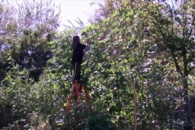 Oklahoma woman grows 13-foot, 6-inch okra plant