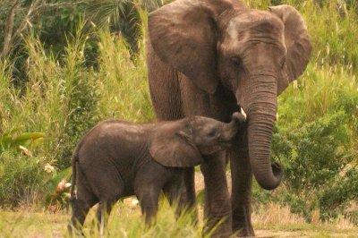 Thailand seizes 739 African elephant tusks