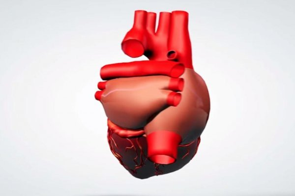 Heart function restored with human stem cells in study with monkeys ...