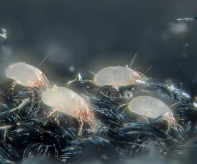 Study uncovers molecular origins of house dust mite allergy