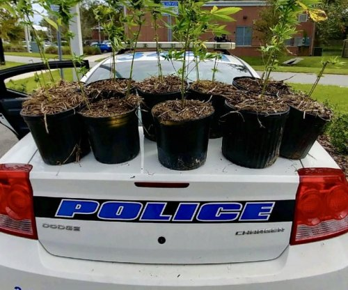 Police ask owner of potted pot plants to claim them