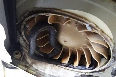Florida man takes apart clothes dryer, finds stuck snake