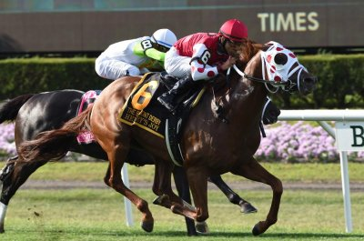 Henley's Joy upsets, Concrete Rose cements status in weekend turf racing