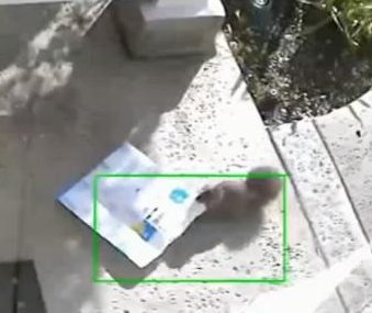 Squirrel steals package from front porch of Los Angeles home