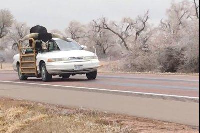 Longhorn steer rides in modified sedan on Nebraska highway