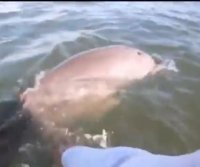Florida man on jet ski ride frees dolphin tangled in rope