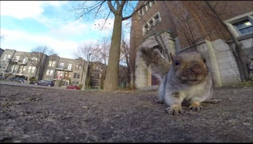 Squirrel carries GoPro camera up a tree