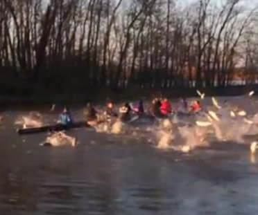 Flying Asian carp attack Missouri rowing team