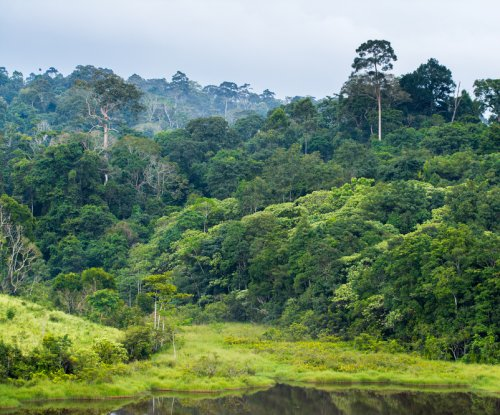 Study: Tropical forests to disappear faster than expected