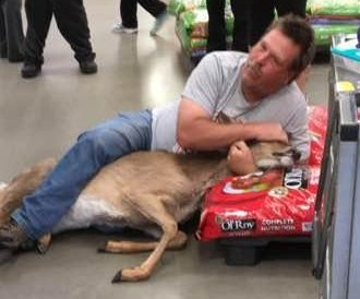 Shopper wrestles deer that wandered into Minnesota Walmart