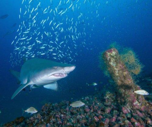 Female sand tiger sharks visit the same shipwrecks off North Carolina coast