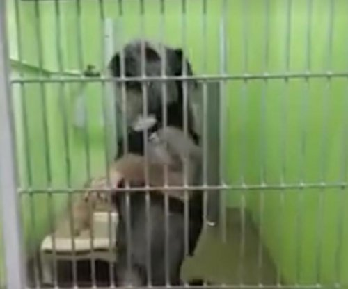 Rescue dog named Ginger Rogers expresses herself through dance