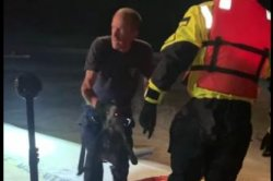 Authorities rescue two dogs from ponding basin in California