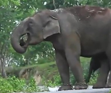 Elephant steals handbag from car in India