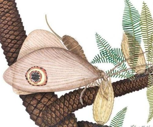 Scientists identify butterfly-like insect from the Jurassic age