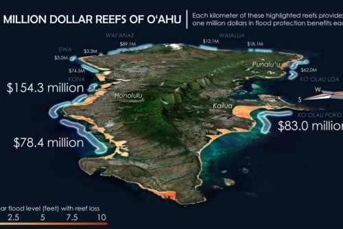 Study: Coral reefs' protection saves U.S. property owners billions each year
