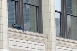 Escaped parrot rescued from Chicago window ledge