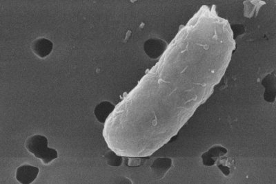 Bacteria use viruses to differentiate themselves from their competitors