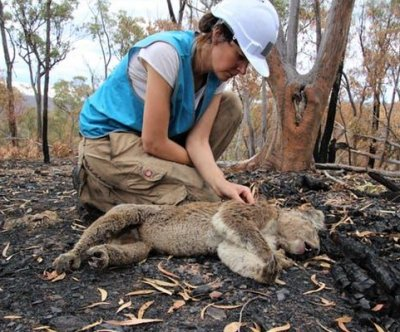 Scientists find burnt, starving koalas weeks after the bushfires