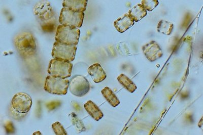 Britain's plankton population has changed dramatically over the last 60 years
