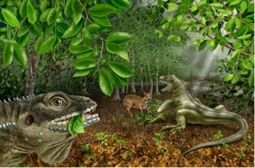 New species of ancient Asian lizard named for rocker Jim Morrison