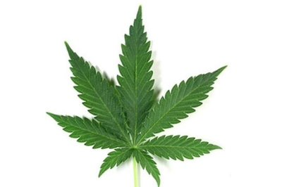Marijuana replacing opioids, sleep aids for many, study finds