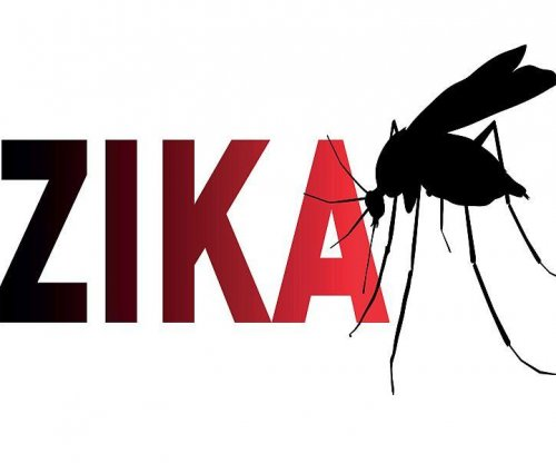 Imaging studies shed light on Zika's effects