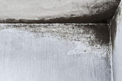 Wallpaper may be breeding ground for dangerous toxins