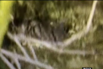 Watch: Authorities probing crocodile sightings in Michigan river