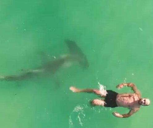 Hammerhead shark circles oblivious swimmer in Florida