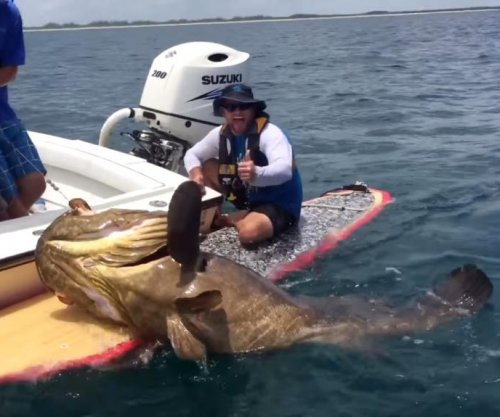 Fisherman on a paddleboard lands 400-pound grouper