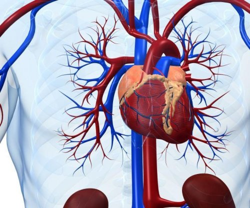 An aging heart may weaken memory