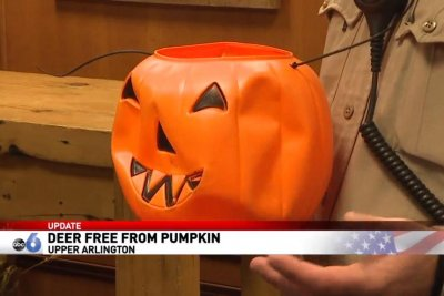 Ohio deer appears to have freed itself from plastic pumpkin