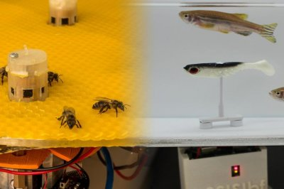 Robots help bees and fish communicate