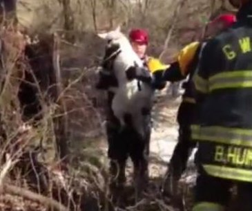 N.J. firefighters rescue curious dog carried away by creek