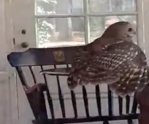 Owl evicted from chimney at Duke University