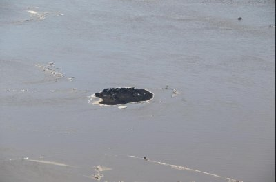 Nebraska scrambles to clear away cattle carcasses scattered by flooding