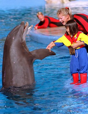 New York equity firm to purchase SeaWorld