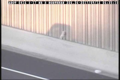 Arizona troopers stop traffic for dog stuck on roadway
