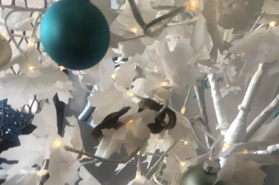 Family finds snake slithering through Christmas tree branches