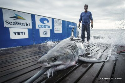 Trackers see great white shark in Long Island Sound for first time