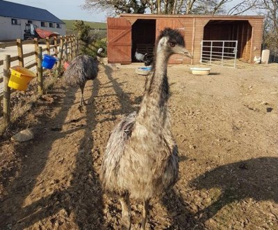 Owner warns of emu on the loose in British town