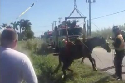 Fire rescue crews lift stranded horse out of Miami ditch