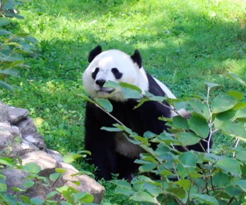 National Zoo celebrates Bei Bei the panda's 4th birthday