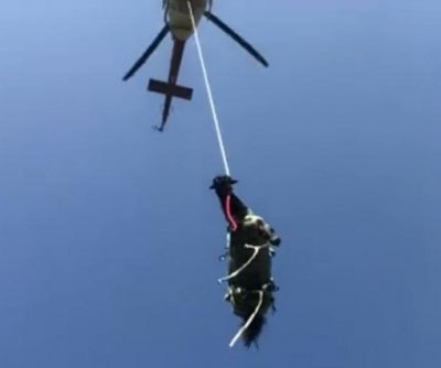 Watch: Helicopter hoists harnessed horse out of 60-foot ravine