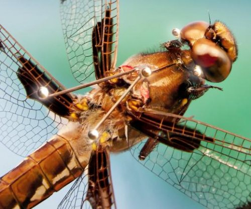 Dragonflies on the hunt employ sophisticated maneuvering