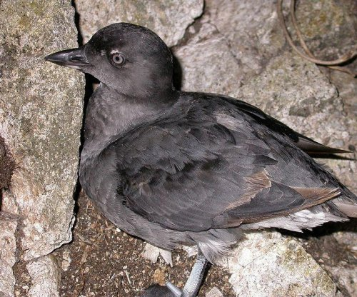 Scientists remain puzzled by mass of dead birds along West Coast